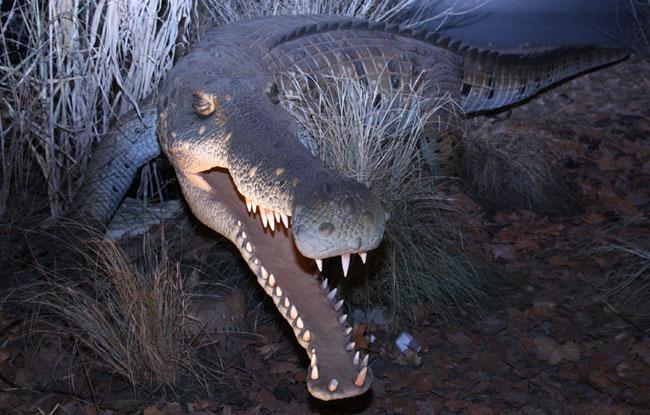 仿真丛林动物-鳄鱼
