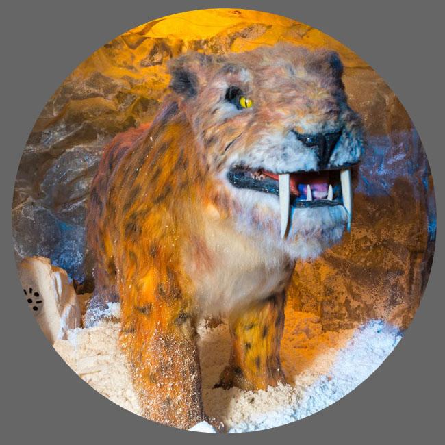 仿真冰河期巨兽-剑齿虎