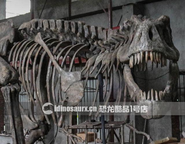 仿真恐龙骨架的制作-成品