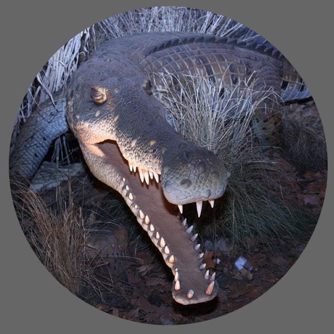 仿真雨林动物-鳄鱼