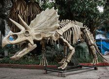 恐龙骨架导航图