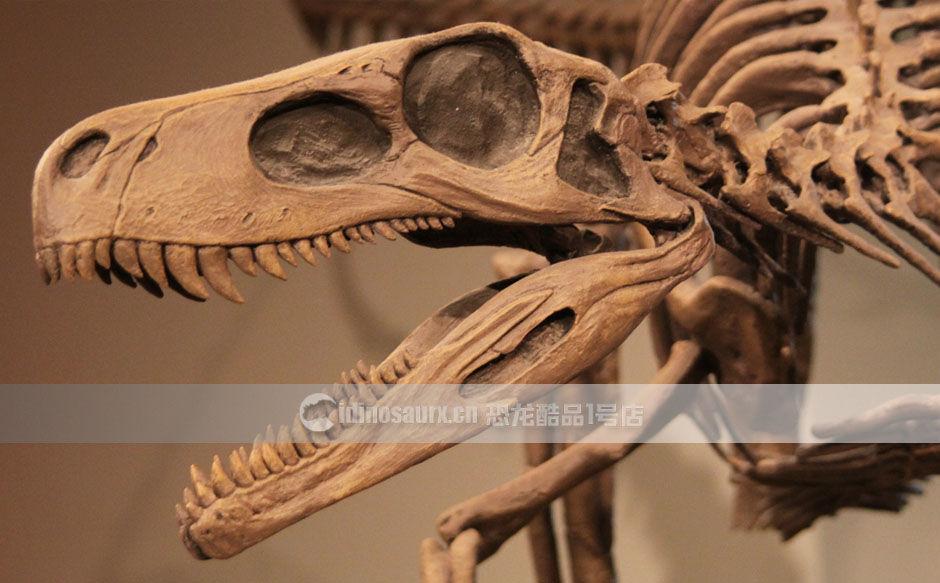 恐龙骨架产品