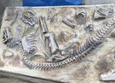 恐龙挖掘现场导航图
