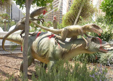 恐龙组合导航图