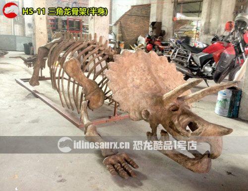 仿真三角龙化石(半身)