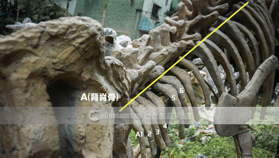 安装仿真恐龙骨架指导