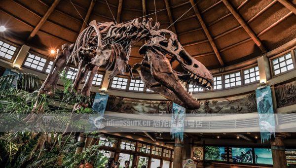博物馆恐龙骨架定制