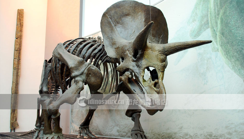 仿真恐龙化石制作