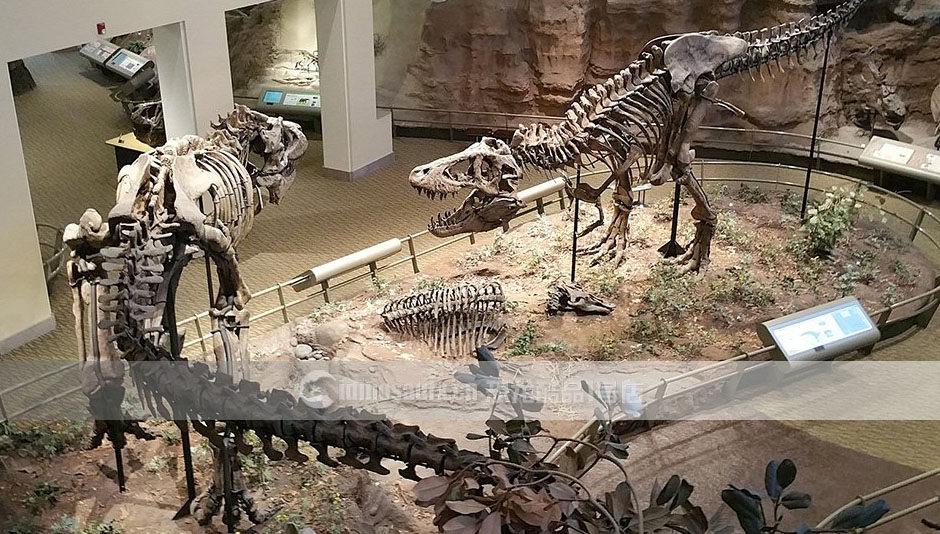 博物馆恐龙骨架制作