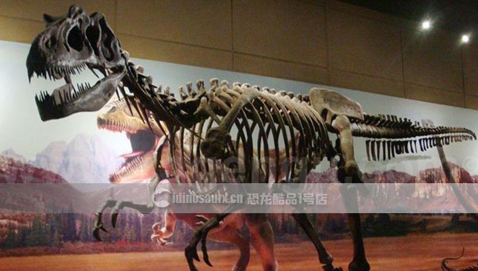 商展恐龙化石