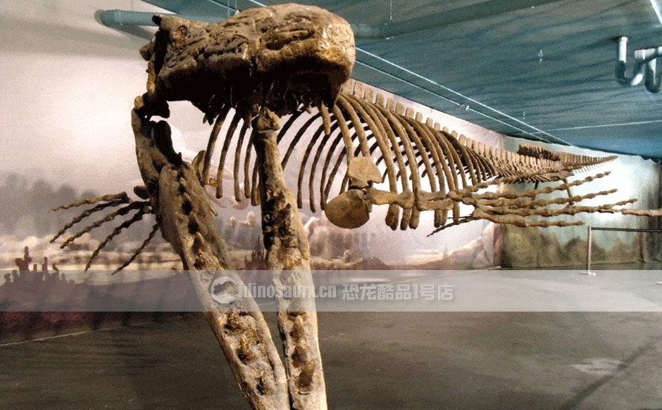 教学展馆海洋动物骨架装饰