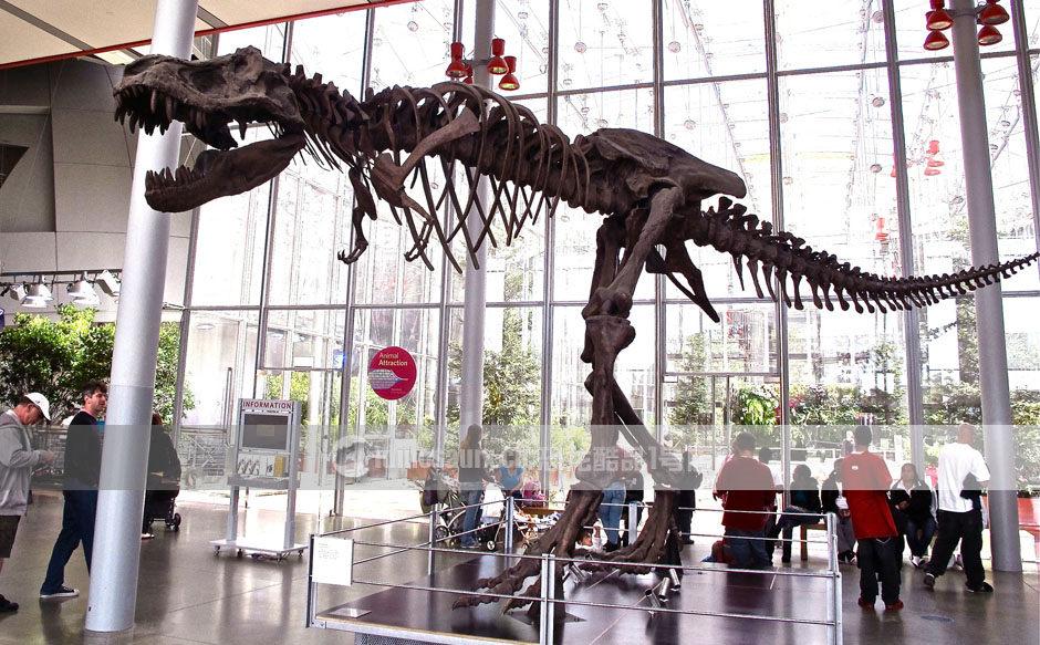 大型恐龙骨架装饰展品